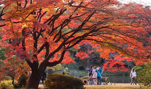 10 Popular Autumn Leaves Viewing Spots in Tokyo